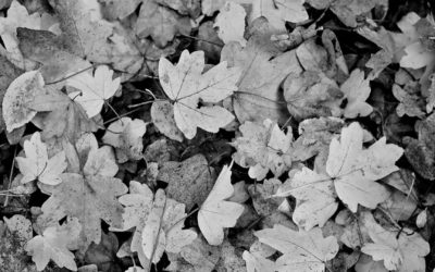 Autumn Shakespeare Season (VIC)